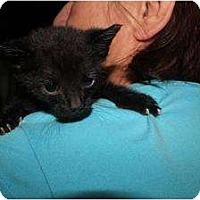 Adopt A Pet :: Jerry - Miami, FL