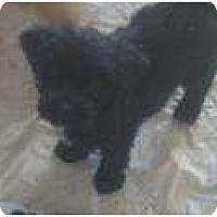Adopt A Pet :: Kate Middleton - Phoenix, AZ