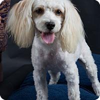 Adopt A Pet :: CoCo - Nuevo, CA