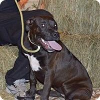 Adopt A Pet :: Mystic - Lima, OH