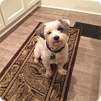 Adopt A Pet :: Lucky - Shawnee Mission, KS