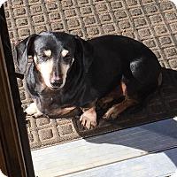 Adopt A Pet :: Annaliese - Louisville, CO