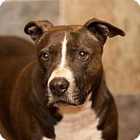 Adopt A Pet :: Wayne - Versailles, KY