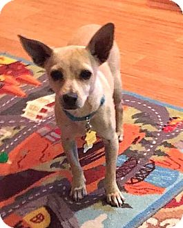 Terrier (Unknown Type, Small) Mix Puppy for adoption in Tijeras, New Mexico - Einstein