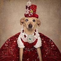 Adopt A Pet :: Gabby - El Dorado, AR