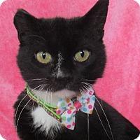 Adopt A Pet :: Egypt - Lloydminster, AB