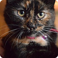 Adopt A Pet :: Jill - Columbus, IN