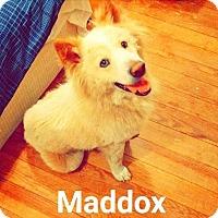 Adopt A Pet :: A418889 Maddox - San Antonio, TX
