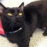 Adopt A Pet :: Meeko - Anderson, IN