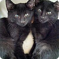 Adopt A Pet :: Peanut's Boys - Scottsdale, AZ