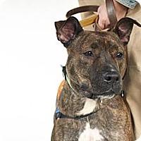 Adopt A Pet :: Silly TRACEY needs HOME ASAP! - Durham, NH