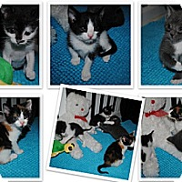 Adopt A Pet :: Renny, Rory, Maeve and Liam - Waxhaw, NC