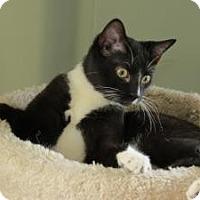 Adopt A Pet :: Serena - Raritan, NJ