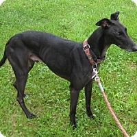 Adopt A Pet :: Jet - Harrodsburg, KY