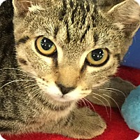 Adopt A Pet :: Lisa - Chattanooga, TN