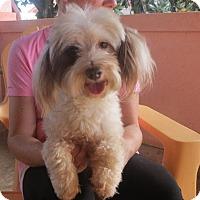 Adopt A Pet :: Noodles - Greenville, RI