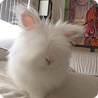 Adopt A Pet :: Aspen - Los Angeles, CA