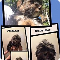Adopt A Pet :: Marlene - Scottsdale, AZ