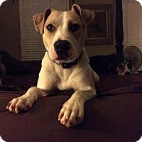 Adopt A Pet :: Thor - High Point, NC