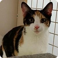 Adopt A Pet :: Penny - St. Louis, MO