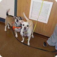 Adopt A Pet :: ALBEE - Temple, TX