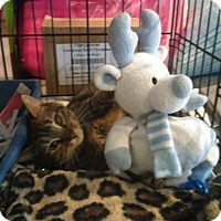 Adopt A Pet :: Torteleni - Whitestone, NY