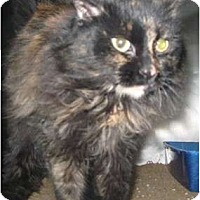 Adopt A Pet :: DOLLY - Phoenix, AZ