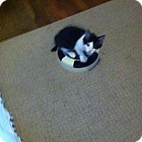 Adopt A Pet :: Jitterbug - Chesterfield, VA