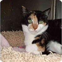 Adopt A Pet :: kELLY - Fort Lauderdale, FL