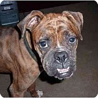 Adopt A Pet :: Abbey Rose - Savannah, GA