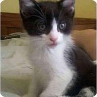 Adopt A Pet :: Justin - Jenkintown, PA