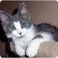 Adopt A Pet :: Chloe - Arlington, VA