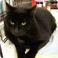 Adopt A Pet :: Adam - Riverside, RI