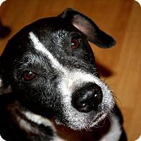 Adopt A Pet :: Tessa - Austin, TX