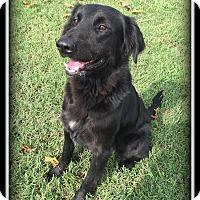 Adopt A Pet :: Tyson - Indian Trail, NC