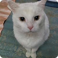 Adopt A Pet :: Toby - Bonner Springs, KS