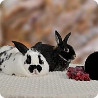 Adopt A Pet :: Syndey - Marietta, GA