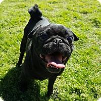 Adopt A Pet :: Abigail - Crump, TN