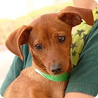 Adopt A Pet :: Peanut - Palmdale, CA