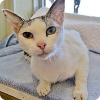 Adopt A Pet :: Daisy - Georgetown, TX