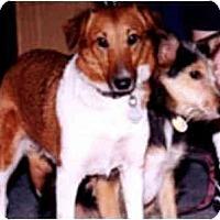 Adopt A Pet :: April - Katy, TX