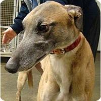 Adopt A Pet :: McBride - Windsor Heights, WV