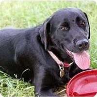 Adopt A Pet :: Skylar - Minneola, FL