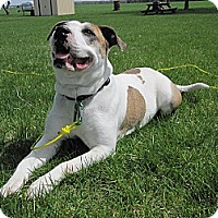 Adopt A Pet :: Aunt Bea - Hamilton, ON