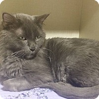 Adopt A Pet :: Vampire (Vlad) - Pueblo, CO