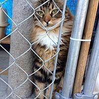 Adopt A Pet :: Charlie - Santa Clarita, CA