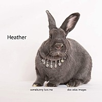 Adopt A Pet :: Heather - Jurupa Valley, CA