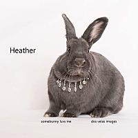 Adopt A Pet :: Heather - Jurupa Valley, CA