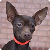Adopt A Pet :: Princess-Adoption pending - Bridgeton, MO