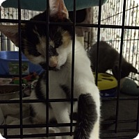 Adopt A Pet :: Hope - Byron Center, MI